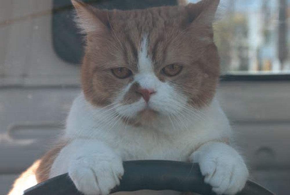 あえてネコを「ふてぶてしく」描いて人気CMに―ワイモバイル「ふてニャン」制作の裏側