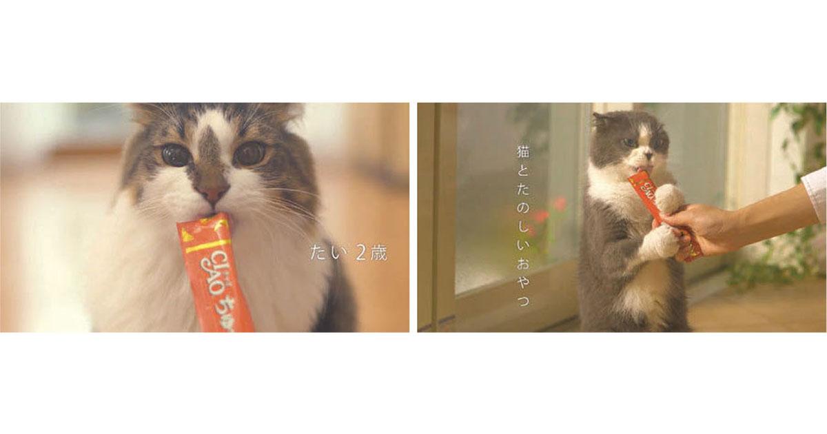 「商品」「猫」「歌」3要素のみのCMを提案