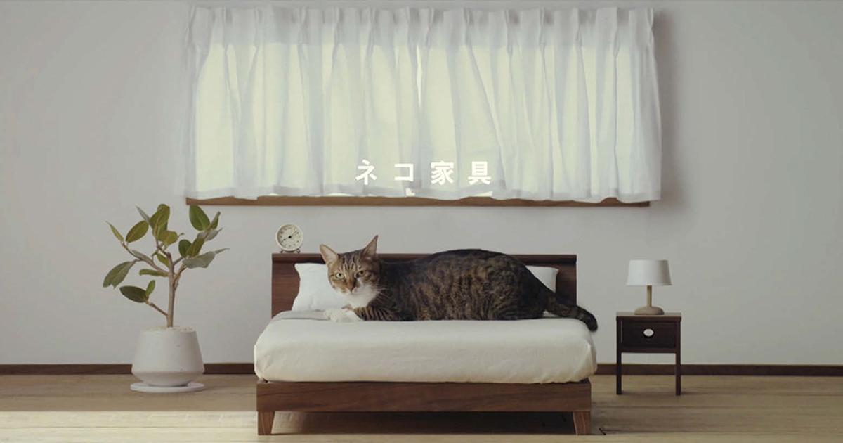 「ネコ家具」動画で産地をニュース化
